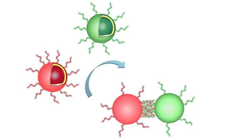 Chemists create clusters of organelles by mimicking nature