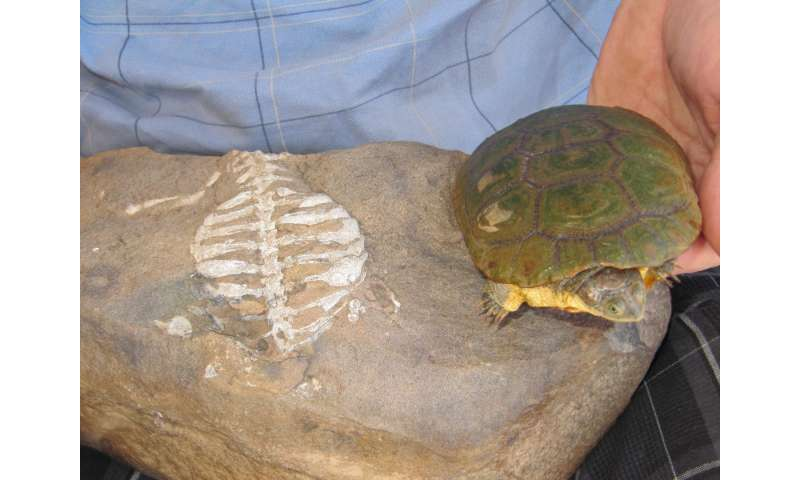 Denver Museum of Nature & Science curator discovers real reason turtles have shells