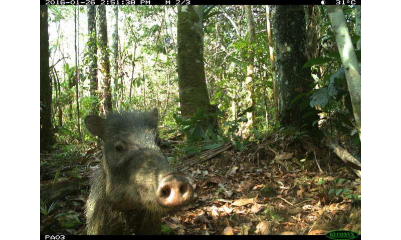 Field Museum expedition captures animal selfies in Amazon Rainforest
