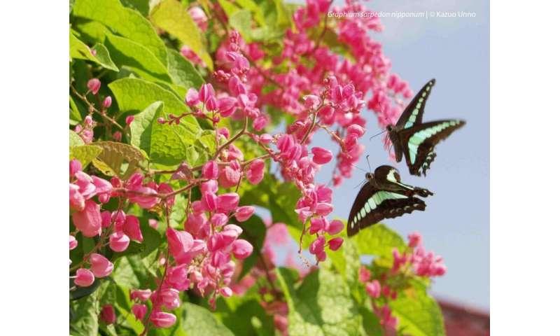 Fifteen shades of photoreceptor in a butterfly's eye
