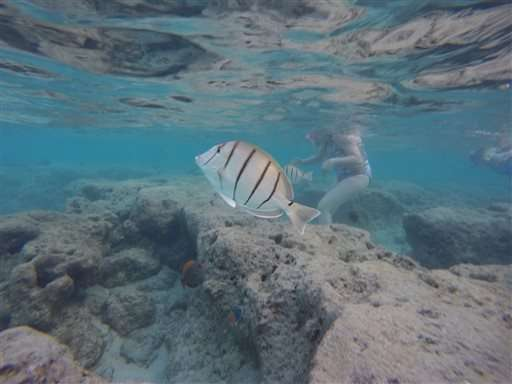 Global coral bleaching event expected to last through 2016