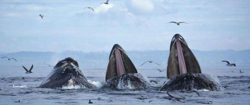 How scientists use DNA to spy on whales and find 'extinct' fish