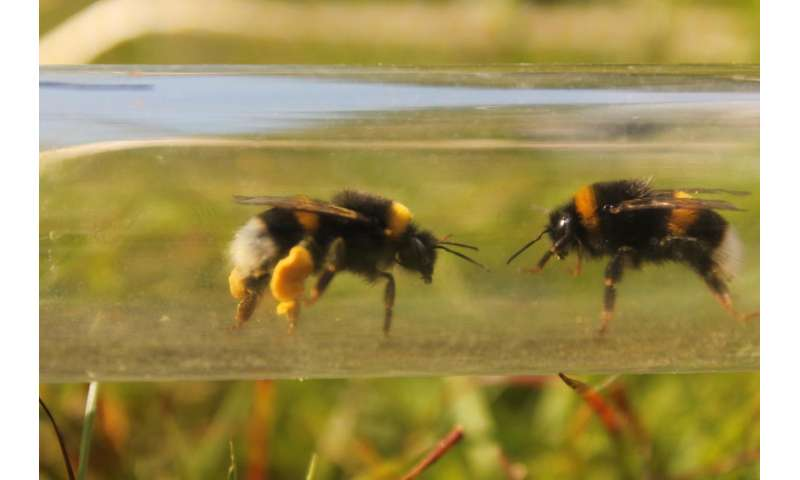 Impact of pesticide on bumblebees revealed by taking experiments into the field