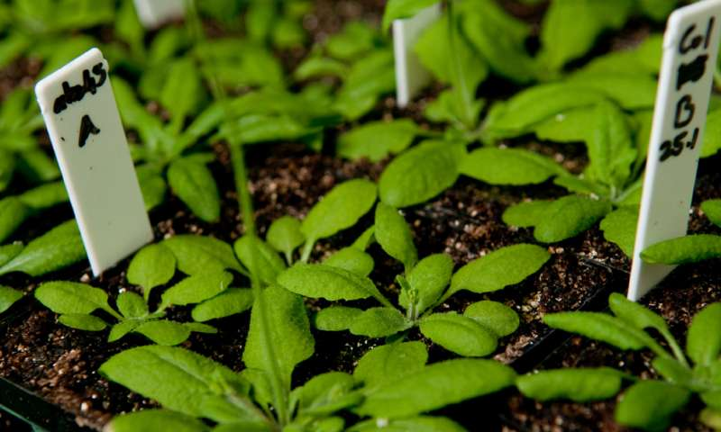 Just add water: New discovery in plant-disease mechanism