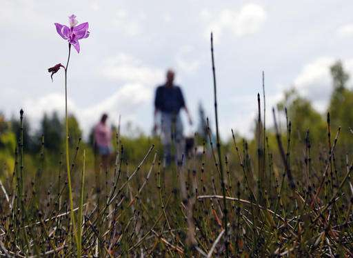 Millions of orchids grow on former mine site in upstate NY