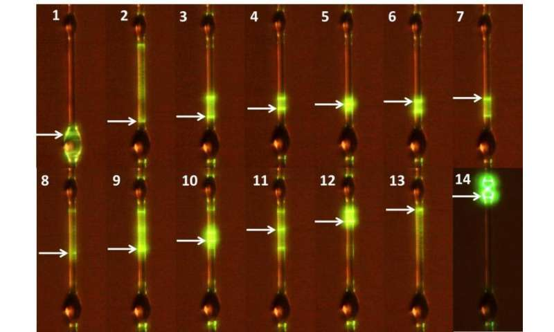 New fabrication and thermo-optical tuning of whispering gallery microlasers