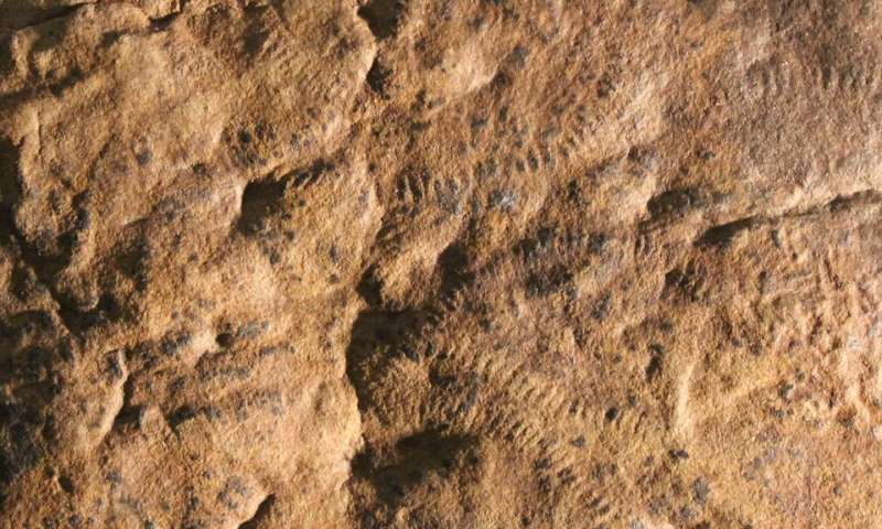 New fossil evidence supports theory that first mass extinction engineered by early animals