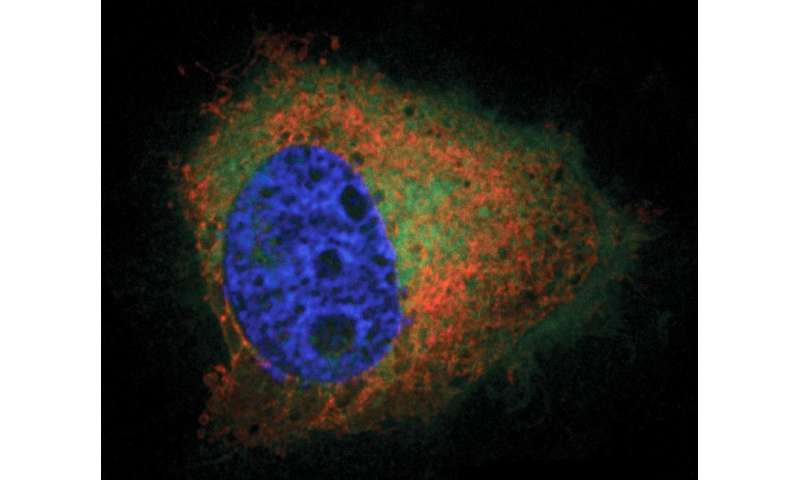 New imaging method developed for lipid with many functions