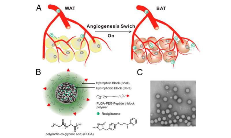 New nanoparticle drug-delivery approach holds potential for treating obesity