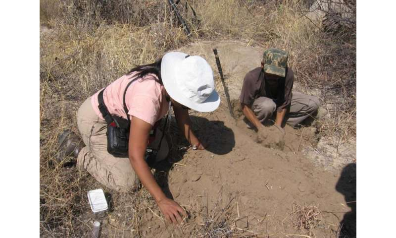 New research sharpens understanding of poison-arrow hunting in Africa