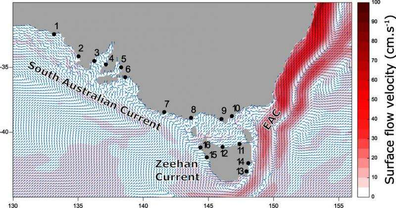 New study maps currents and marine animal movement