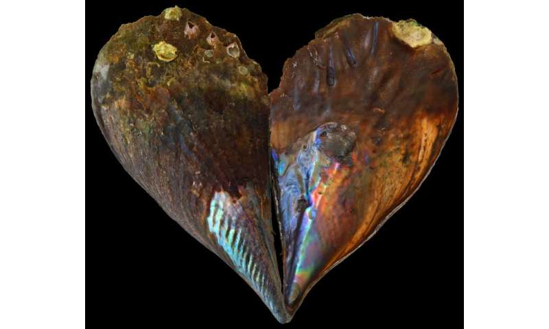 Ocean temperatures faithfully recorded in mother-of-pearl
