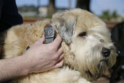 Pet Tech offers to keep animals safe, healthy and connected