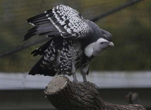 Report: Wildlife populations halved on average since '70s