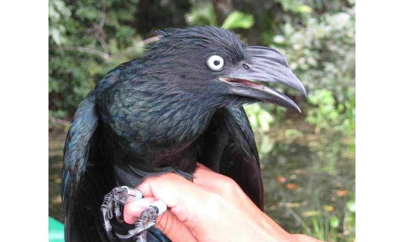 Researcher studies communal nesting in birds