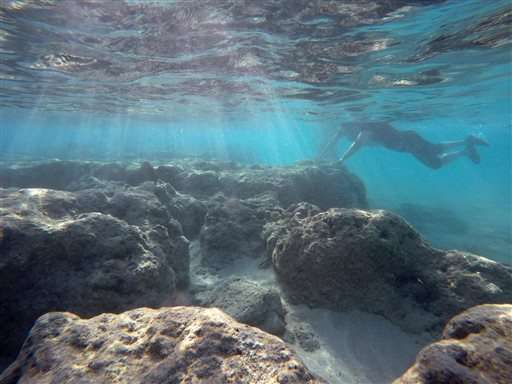 Scientists battle to save world's coral reefs