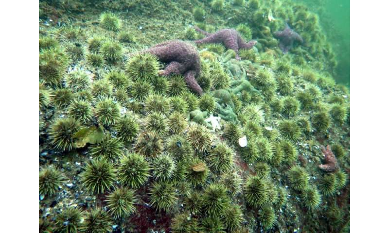 Sea star death triggers ecological domino effect