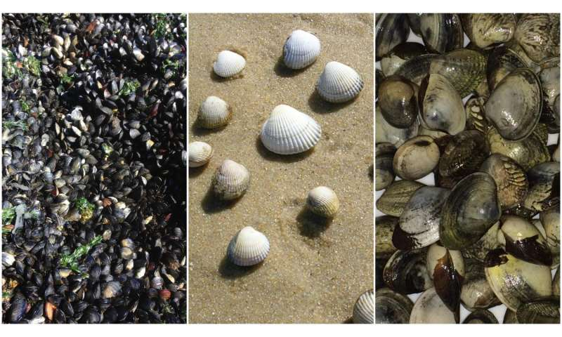 Study finds contagious cancers are spreading among several species of shellfish