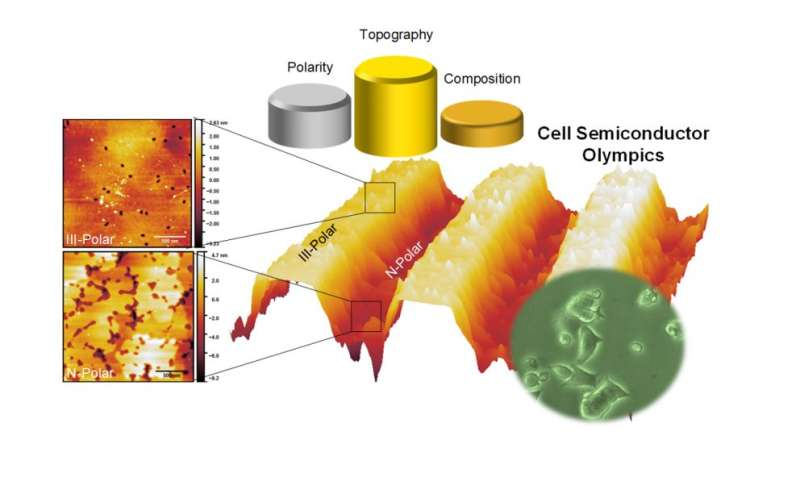 Study finds surface texture of gallium nitride affects cell behavior