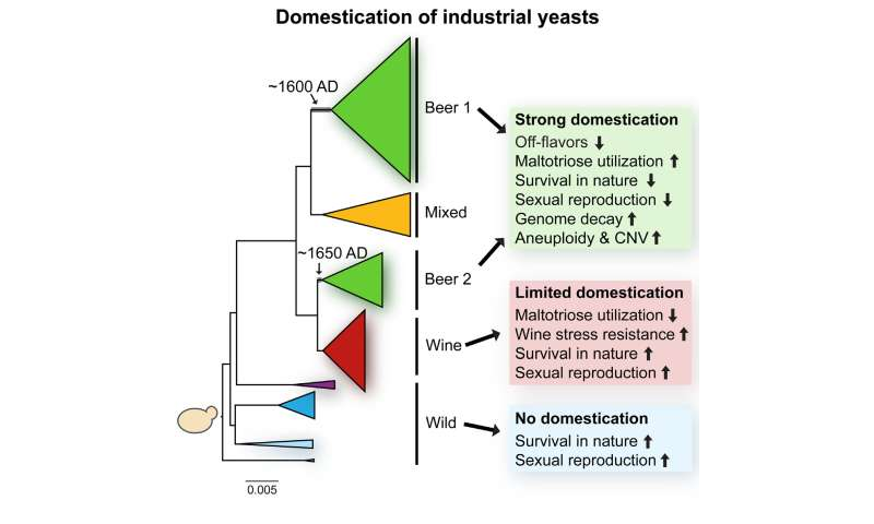 The history of beer yeast
