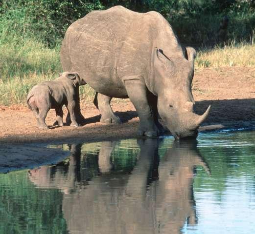 Transport sector joins fight against wildlife crime