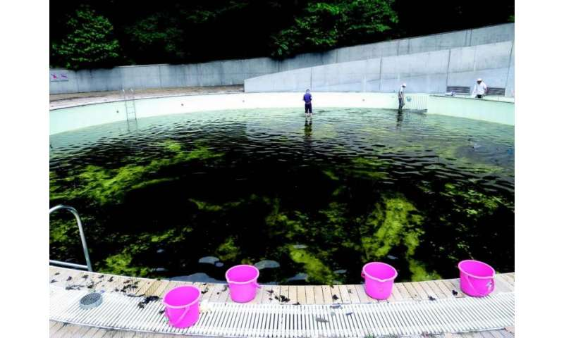Undergraduate student takes to Twitter to expose illegal release of alien fish in Japan