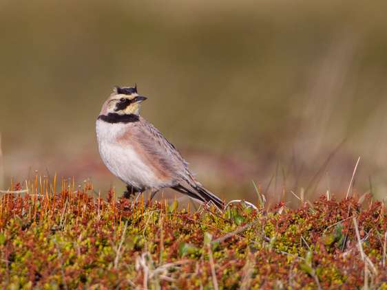 Warmer climate threatening to northern birds