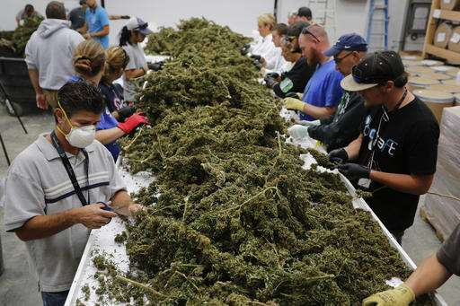 Weed is winning, but the train could still go off the tracks