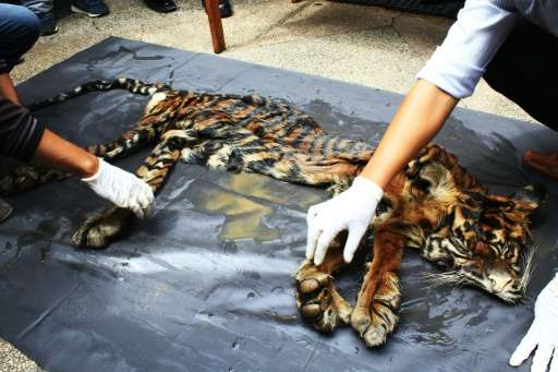 Wildlife officials display seized animal parts, including a tiger skin, in Medan, Indonesia on October 17, 2016
