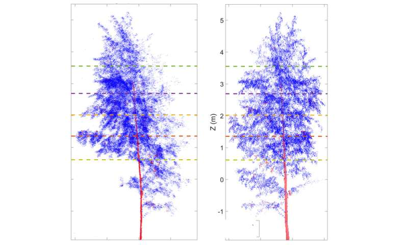 Researchers use laser scanners to study the day-night rhythm of trees