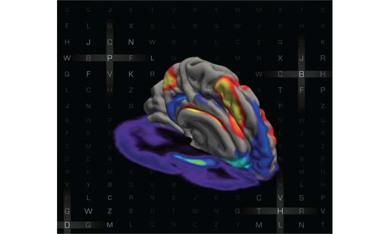 Study reveals how interaction between neural networks changes during working memory