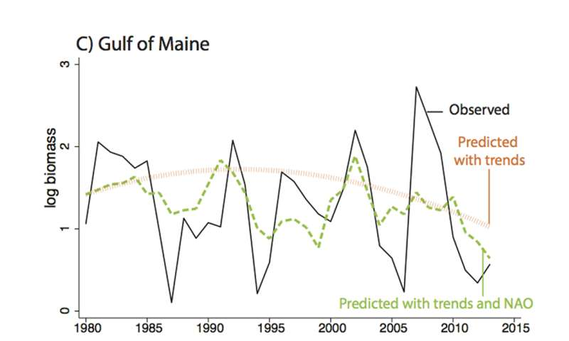 Researchers use the North Atlantic Oscillation as a predictive tool for managing an iconic fishery