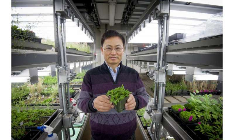 Understanding how plants withstand harsh conditions remains major research challenge