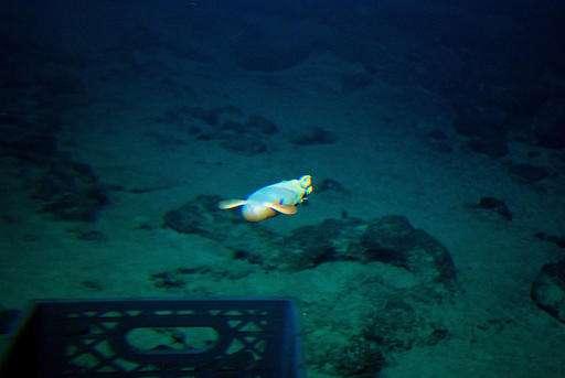 Deep-sea volcano a hotspot for mysterious life