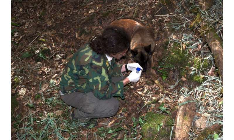 Detection dogs sniff out the droppings of endangered primates