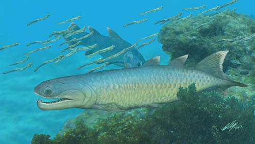 Devonian fish provides unique insights into the early evolution of modern lobe-finned fishes