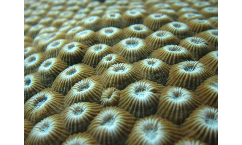 Inner microbial ecosystems keep reef-building corals and other animals 'in the pink'