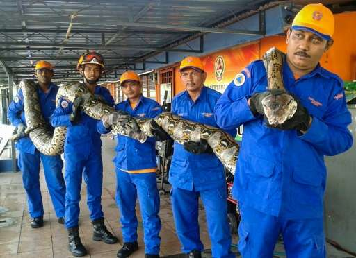 Members of the Malaysia Civil Defence Force pose with the 7.5-metre-long python that was caught at a construction site in Penang