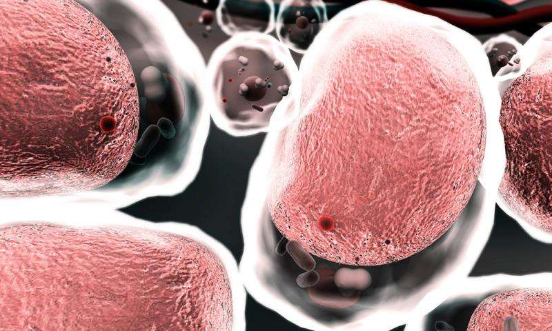 Nanoparticles show promise for treating intestinal inflammation, study finds