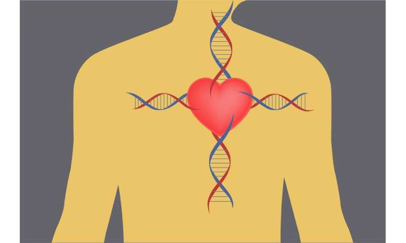 Newly identified genetic errors may prevent heart attacks