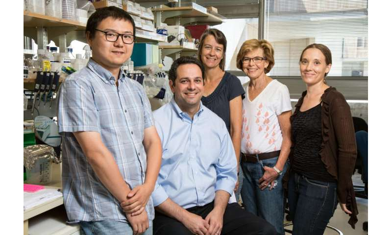 New mechanism discovered for Alzheimer's risk gene