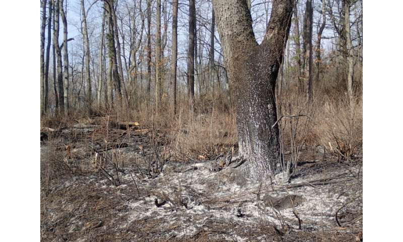 Prescribed burning may benefit rattlesnakes