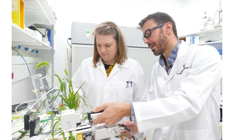 Research to help develop next-generation food crops