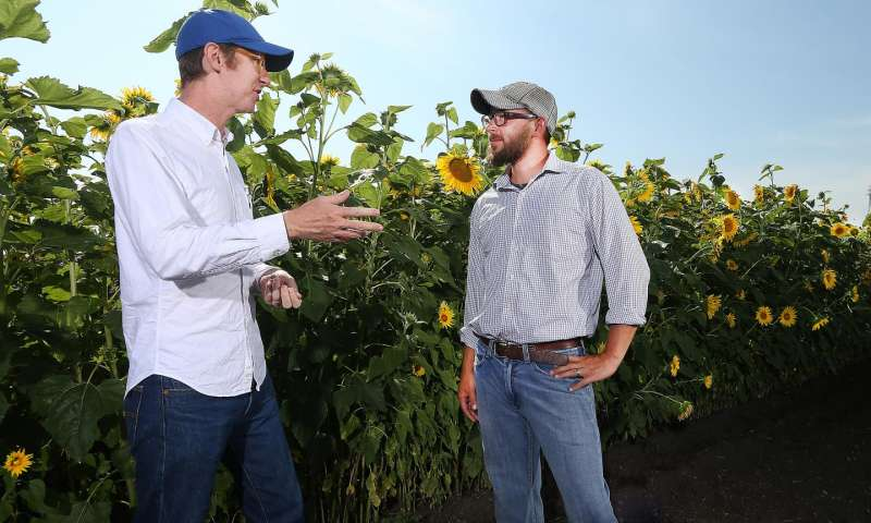 Undergraduates uncover mechanism tied to plant height