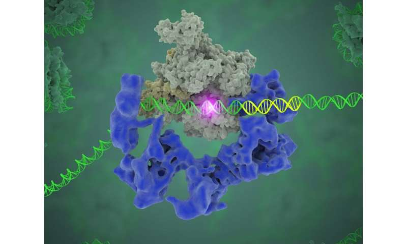 Unlocking the secrets of gene expression