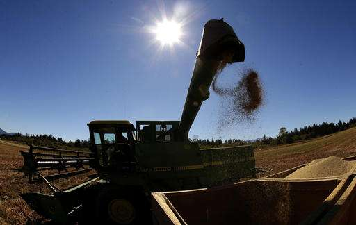 US farmers make foray into quinoa as demand for grain grows