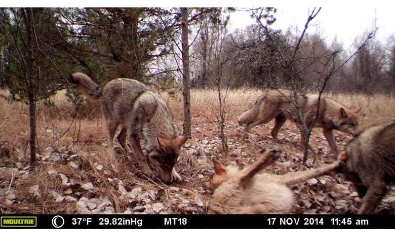 30 years after Chernobyl, UGA camera study reveals wildlife abundance in CEZ