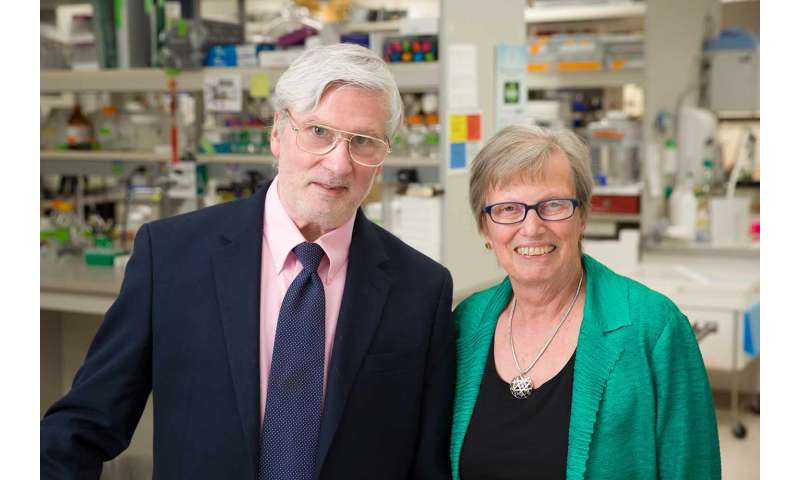 Researchers identify potential immunotherapy drug combination