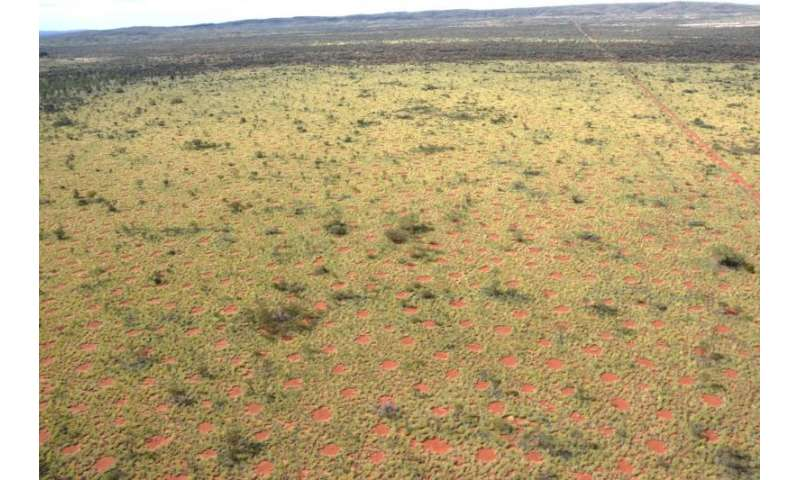 Researchers discover fairy circles in Australia