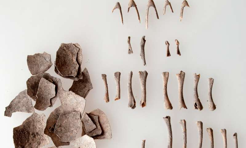 Archaeological excavation unearths evidence of turkey domestication 1,500 years ago